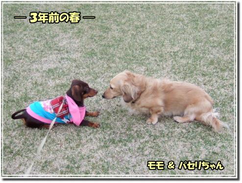 0604220098e.JPG