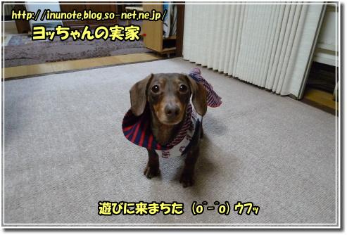 1003210007a.JPG
