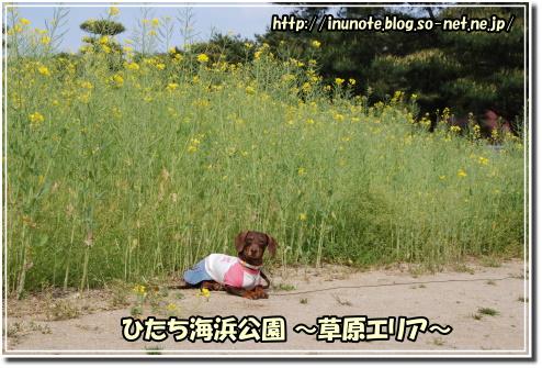 1005090103a.JPG