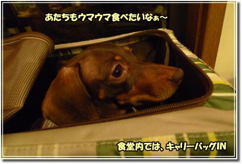 0911141007a.JPG