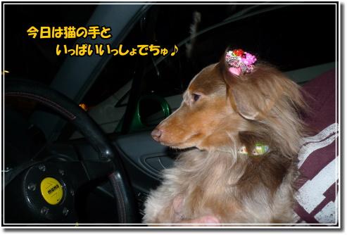 0912210108a.JPG