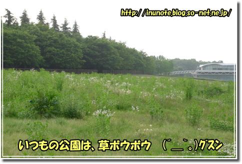 1005250041a.JPG